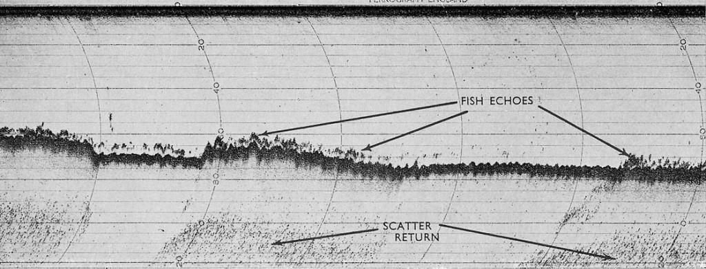 echo fish